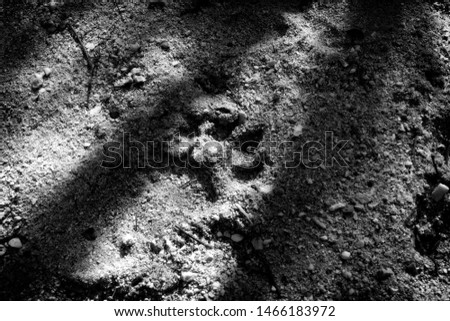 Animal footprint in the sand. Wildlife conservation concept image.