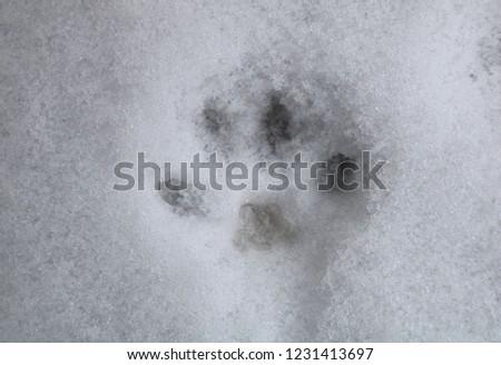 Animal footprint on snow #1231413697