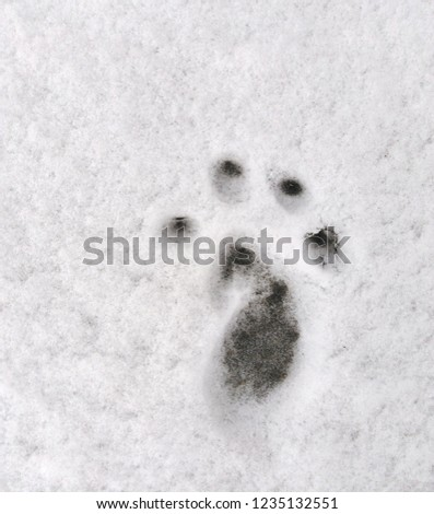 Animal footprint on snow #1235132551