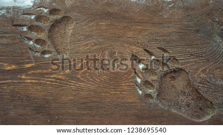 Animal footprint on the wooden surface of a bear. #1238695540