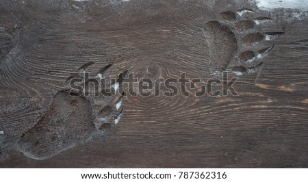 Animal footprint on the wooden surface of a bear. #787362316