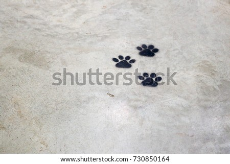 Animal Footprints #730850164