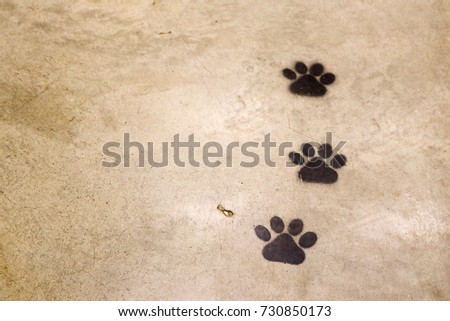 Animal Footprints #730850173