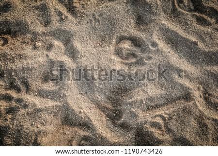 Animal Footprints / Animal foot track on Sand texture background #1190743426