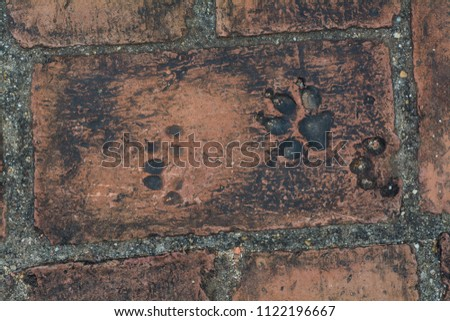 Animalfootprints in the old red brick floor.   #1122196667