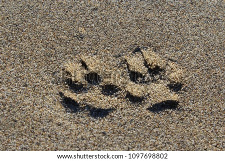 animal Footprints in the sand #1097698802