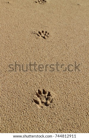 Animal footprints in the sand #744812911