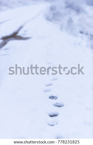 Animal footprints in the snow #778231825