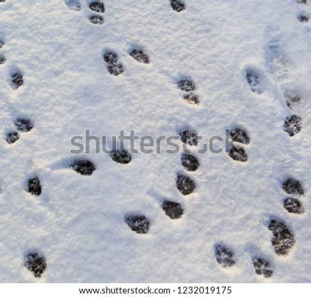 Animal footprints in the snow as a background . #1232019175