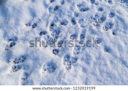 Animal footprints in the snow as a background . #1232019199