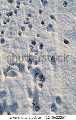 Animal footprints in the snow as a background . #1240622257