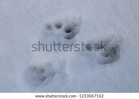 Animal footprints in the snow. Villarrica volcano, Araucania Region, Chile, 05-15-2018. #1233067162