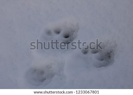 Animal footprints in the snow. Villarrica volcano, Araucania Region, Chile, 05-15-2018. #1233067801