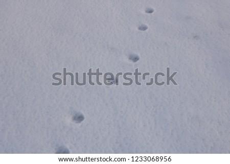 Animal footprints in the snow. Villarrica volcano, Araucania Region, Chile, 05-15-2018. #1233068956