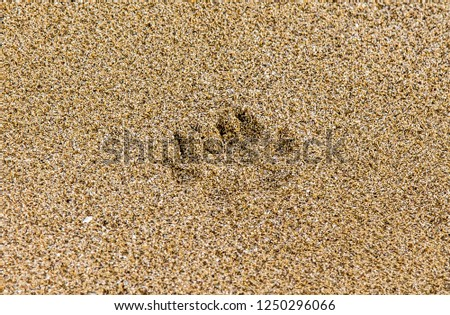 Animal footprints in the wet sand #1250296066