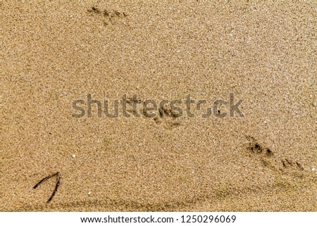 Animal footprints in the wet sand #1250296069