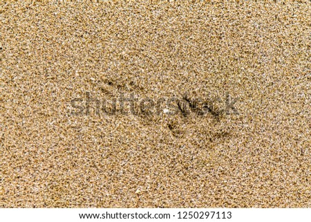 Animal footprints in the wet sand #1250297113