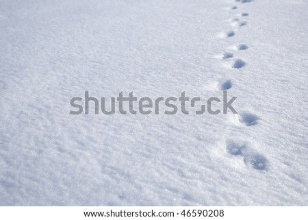 Animal footprints on snow