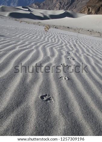 Animal footprints on the desert #1257309196