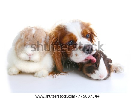 Animal friends. True pet friends. Dog rabbit bunny lop animals together on isolated white studio background. Pets love each other. #776037544