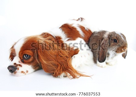 Animal friends. True pet friends. Dog rabbit bunny lop animals together on isolated white studio background. Pets love each other. #776037553