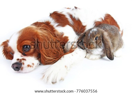 Animal friends. True pet friends. Dog rabbit bunny lop animals together on isolated white studio background. Pets love each other. #776037556