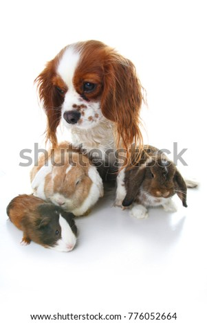 Animal friends. True pet friends. Dog rabbit bunny lop animals together on isolated white studio background. Pets love each other. #776052664
