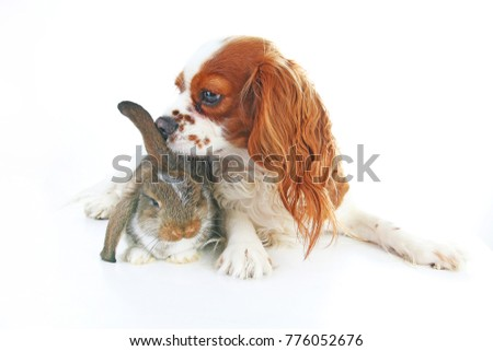 Animal friends. True pet friends. Dog rabbit bunny lop animals together on isolated white studio background. Pets love each other. #776052676
