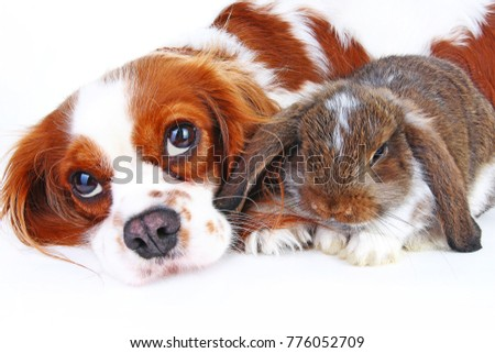 Animal friends. True pet friends. Dog rabbit bunny lop animals together on isolated white studio background. Pets love each other. #776052709