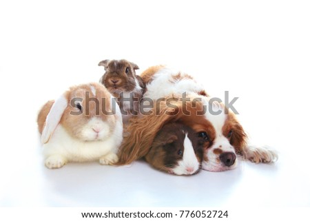 Animal friends. True pet friends. Dog rabbit bunny lop animals together on isolated white studio background. Pets love each other. #776052724