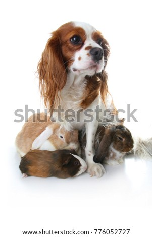 Animal friends. True pet friends. Dog rabbit bunny lop animals together on isolated white studio background. Pets love each other. #776052727