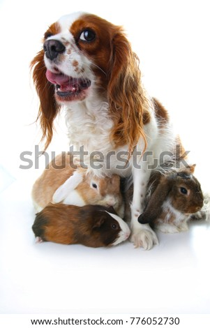 Animal friends. True pet friends. Dog rabbit bunny lop animals together on isolated white studio background. Pets love each other. #776052730