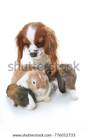 Animal friends. True pet friends. Dog rabbit bunny lop animals together on isolated white studio background. Pets love each other. #776052733