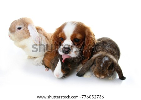 Animal friends. True pet friends. Dog rabbit bunny lop animals together on isolated white studio background. Pets love each other. #776052736