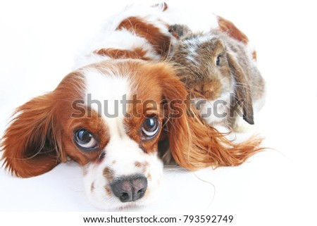 Animal friends. True pet friends. Dog rabbit bunny lop animals together on isolated white studio background. Pets love each other. Cute. #793592749