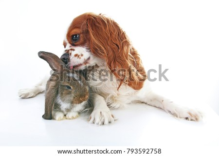Animal friends. True pet friends. Dog rabbit bunny lop animals together on isolated white studio background. Pets love each other. Cute. #793592758