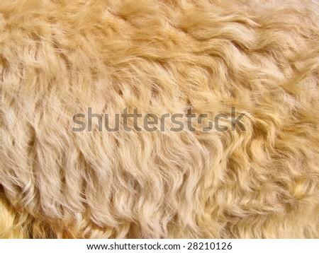Animal fur texture background - stock photo