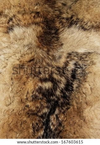 Animal fur. Use for texture or background. Genuine animal fur texture for fashion industry