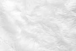 Animal furry white wool sheep background in top view light natural detail, gray fluffy seamless cotton texture. Wrinkled lamb fur fibre skin, rug mat raw material, fleece woolly textile wave