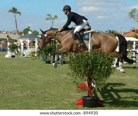 animal- horse - bay hand rider clearing jump at equestrian competition