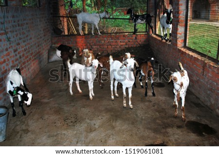 Animal husbandry India, supporting villagers for livelihood income generation.
