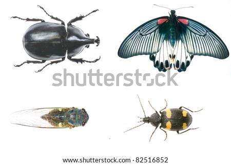 animal insect bug set collection