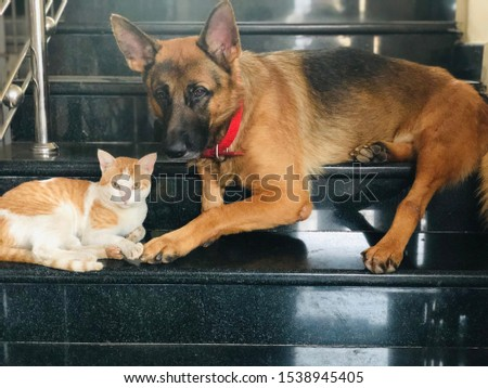 Animal lover's cat and dog