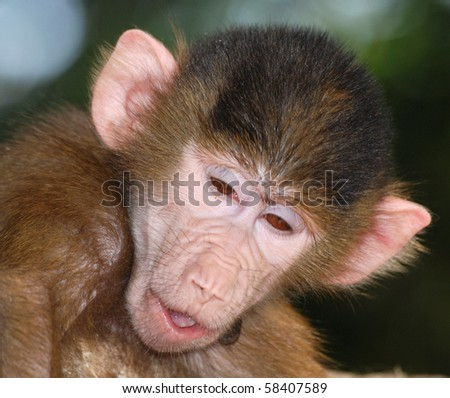 animal monkey fun portrait