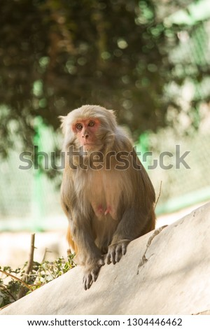 Animal Monkey Photo