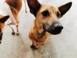 Animal photo : Cute stray dog happy dog,Cute dog closeup,Thai street dog now has a home.