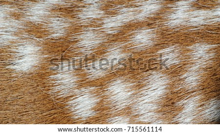 Animal print background  #715561114