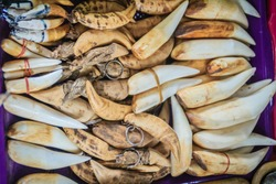 Animal's fang amulet for sale. Souvenirs made of animal's bone and tooth for sale as amulet at the Thai-Cambodia border market.