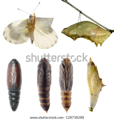 Animal set, butterfly and moth cocoon collection isolated