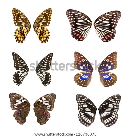Animal set butterfly wing collection isolated
